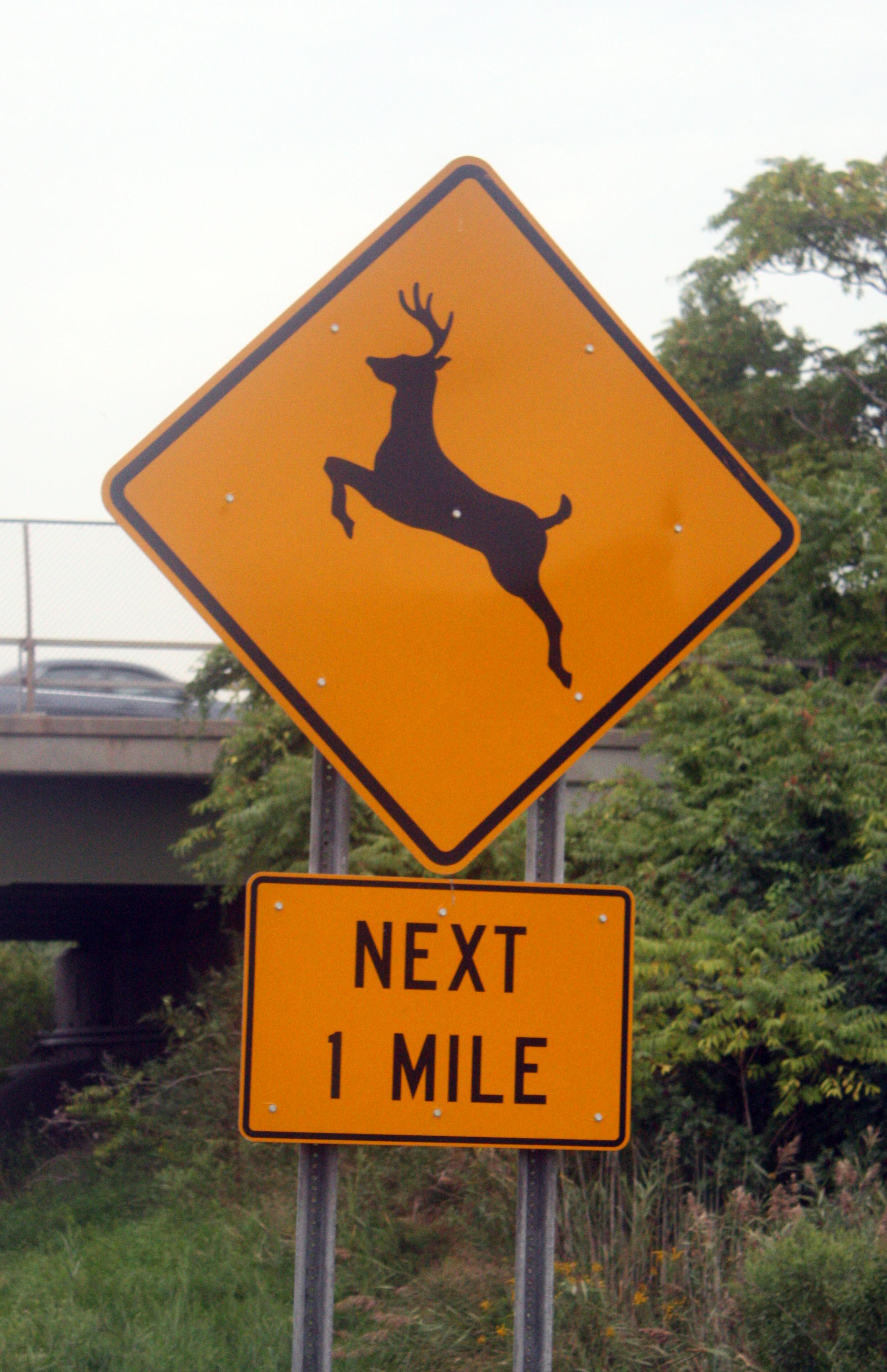 zne wzne deer